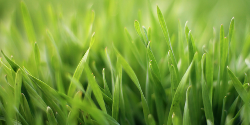 Close-up of blades of grass