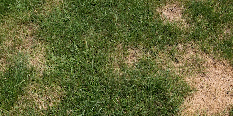 Tips On How To Repair Bald Spots In Your Lawn This Fall