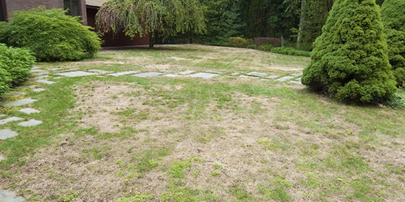 lawn in st augustine with bald spots
