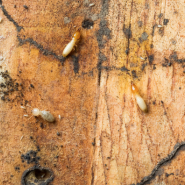 Protect your home from termites