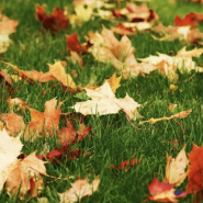 Eliminate Allergy Triggers in Your Home This Fall