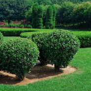 How to Care for Your Trees in the Summer Heat