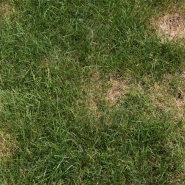 How to Repair Bald Spots in Your Lawn This Fall